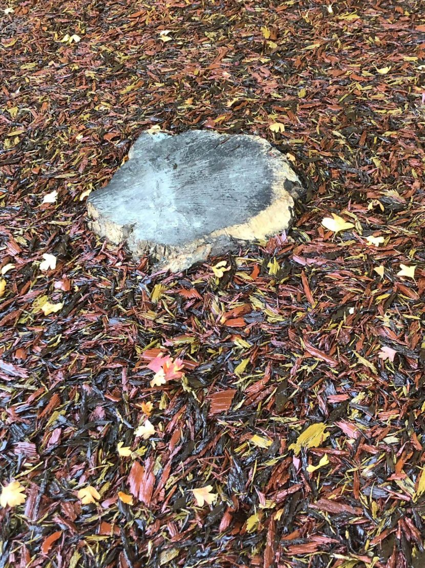 muswell hill primary school tree stump